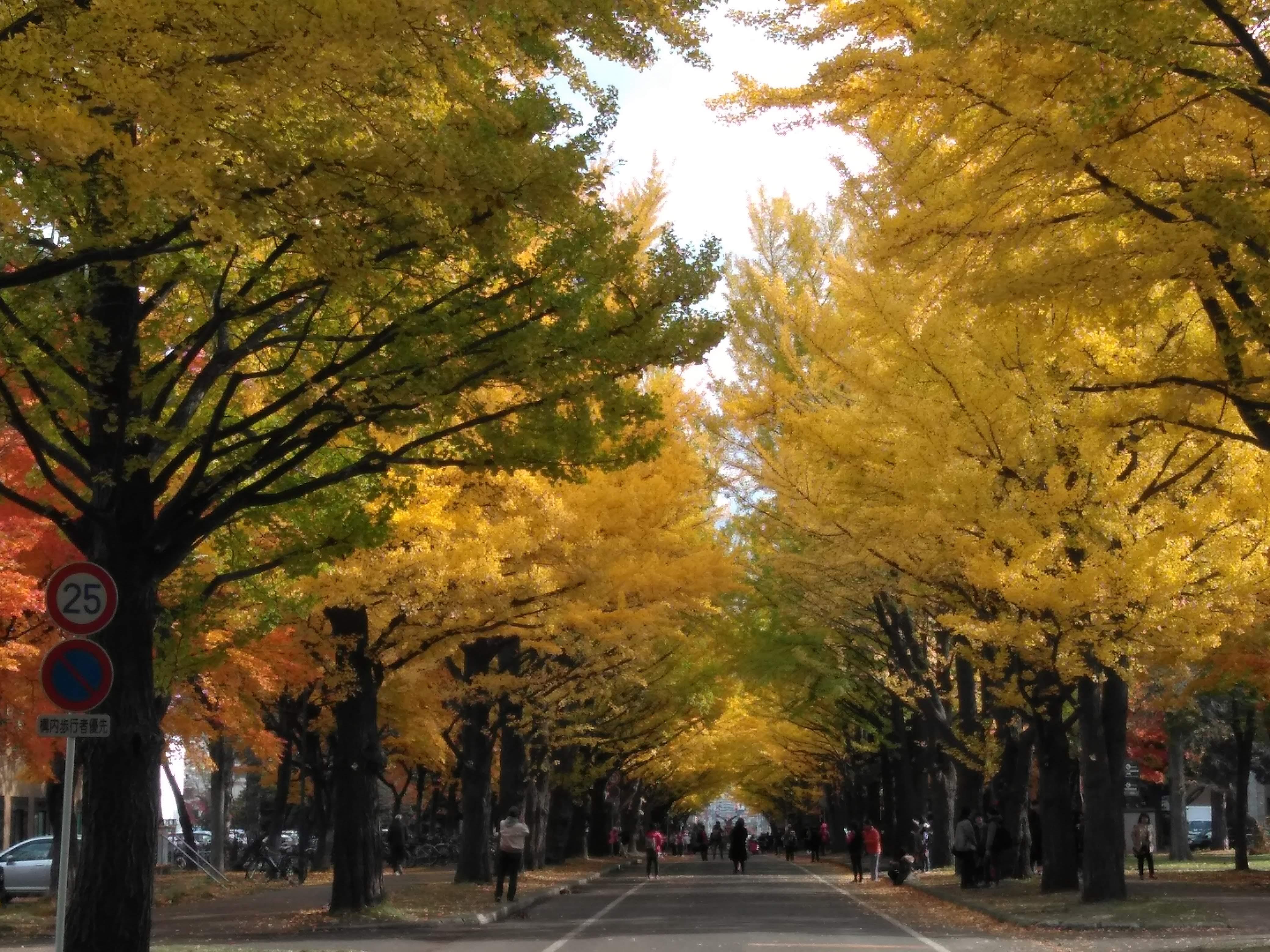 日本会計研究学会 第79回大会 北海道大学・北星学園大学